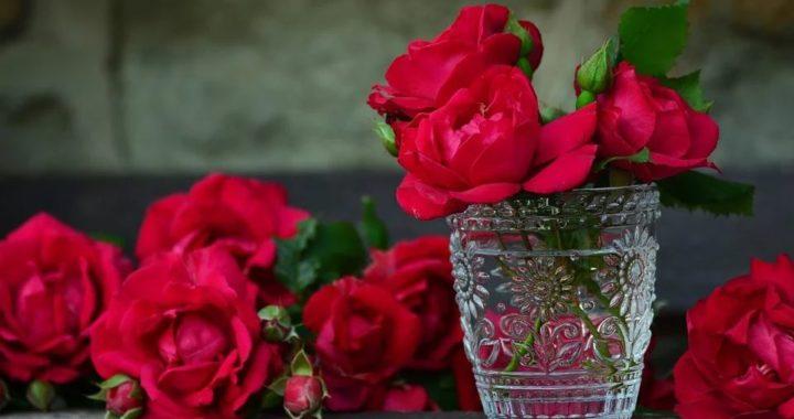 rose éternelle 2