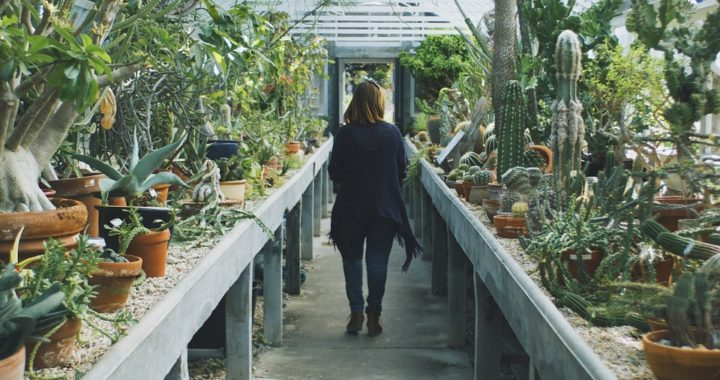 serre jardin