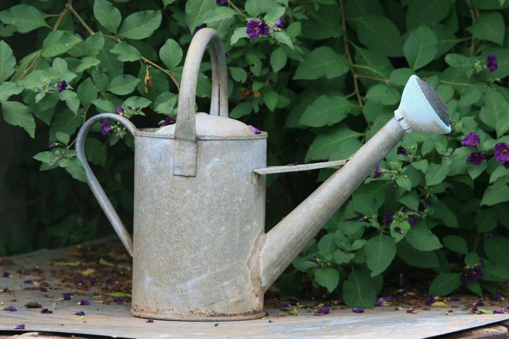 arrosoir-pour-construire-de-haie-les-bons-arbustes