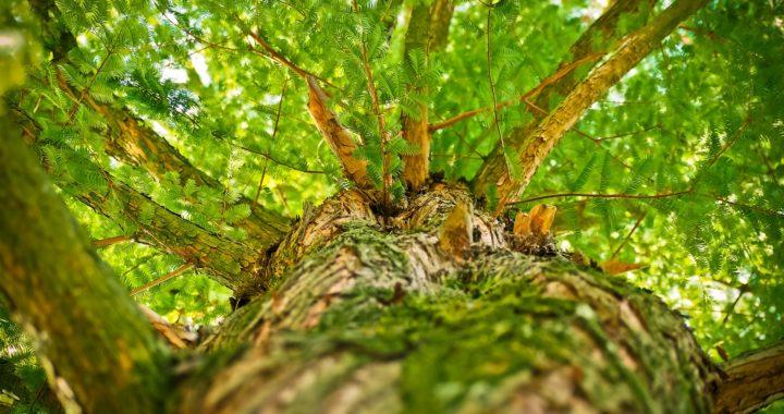 arbre-esthétique-branches-forest